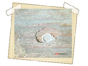 Výletový otvor brouka s viditelným zbytkem kukly